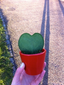 Love is in the…Cactus?
