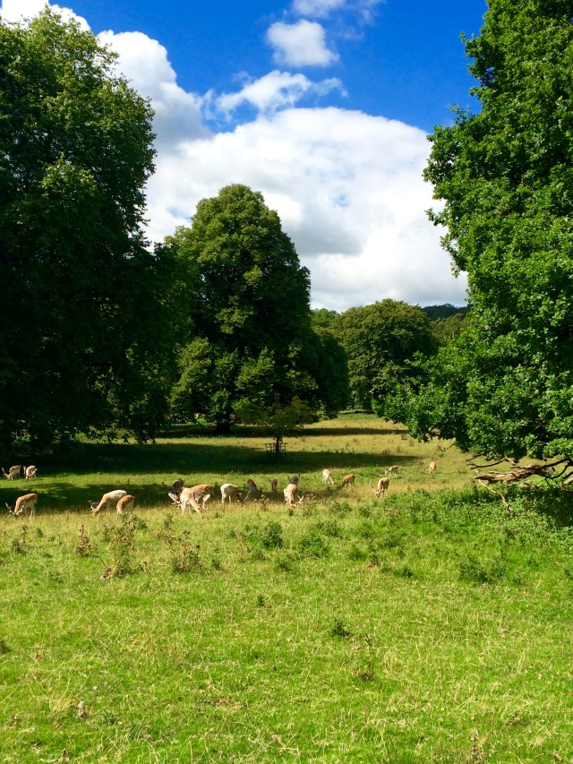 deer park bristol ashton court